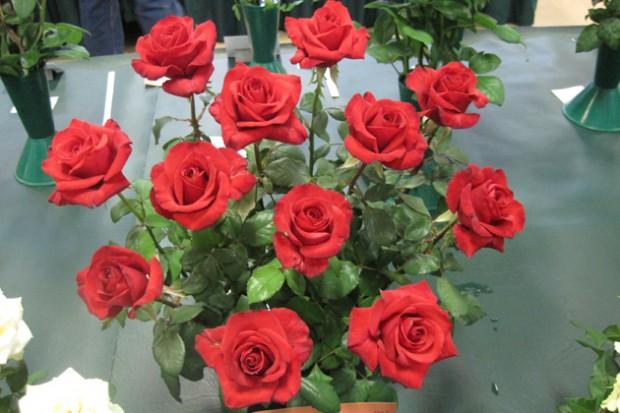 Hồng cắt cành Kardinal rose